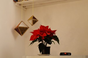 poinsettia-tv-christmas