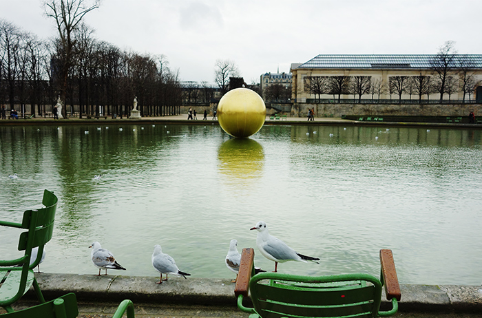 jardin-tuileries-seagull-paris