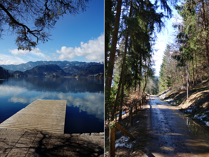 lake-bled-jetty-trees-slovenia