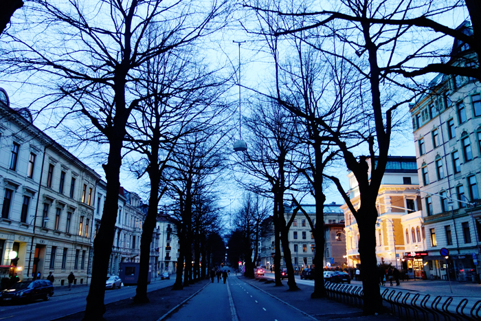 gothenburg-trees-night