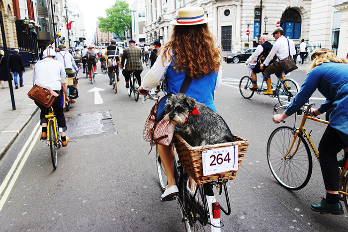 dog-in-basket-tweed-run-london
